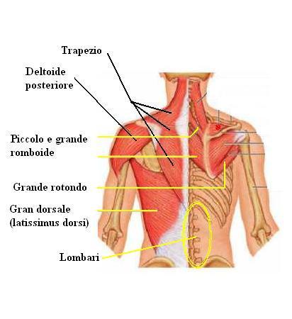 Lapplicatore di Kuznetsov come rivolgersi a osteochondrosis cervicale
